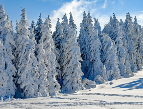 Kamperen tussen de sneeuwpoppen